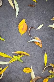 Foglie cadute secche gialle sull'asfalto. sfondo autunnale, motivo naturale