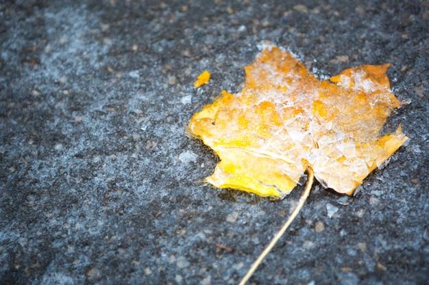 Una foglia d'acero gialla secca caduta si è congelata nel ghiaccio sull'asfalto. le prime gelate autunnali, ottobre, novembre. foglia congelata nel ghiaccio, primo piano