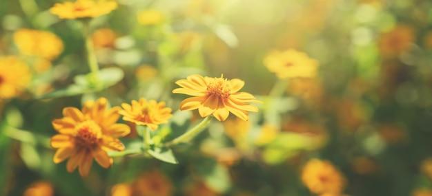 Fiore giallo in fiore con il sole in natura