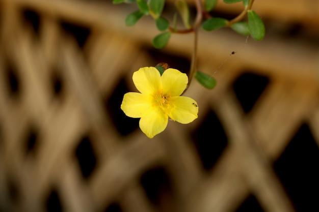 Fiore giallo vicino