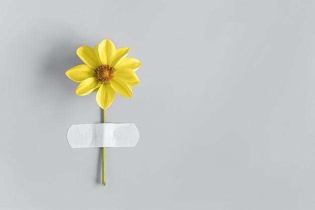Il fiore giallo è incollato con un cerotto adesivo su grigio