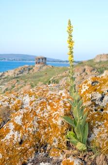 Fiore giallo, costa rocciosa estiva e promontorio con padiglione