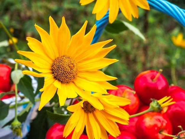 Fiori gialli su un cesto con mele in un giardino di campagna estivo closeup