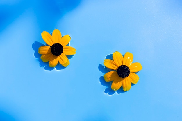 Fiori gialli su uno sfondo di acqua blu sotto luce naturale. vista dall'alto, piatto.