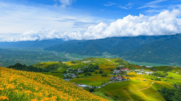 Fiori gialli sulla città di montagna di taitung, taiwan.