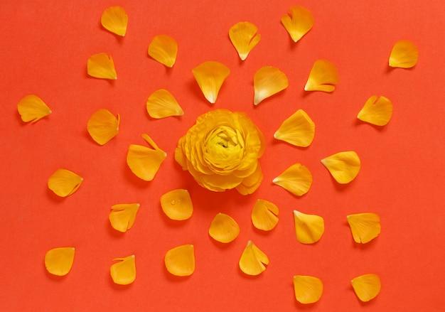 Fiori gialli e petali su una vista dall'alto di sfondo rosso