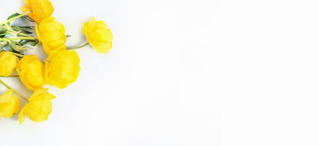 Fiori gialli su sfondo bianco, con copia spazio