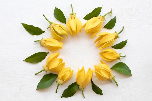 Fiori gialli ylang disposizione cerchio stile cartolina