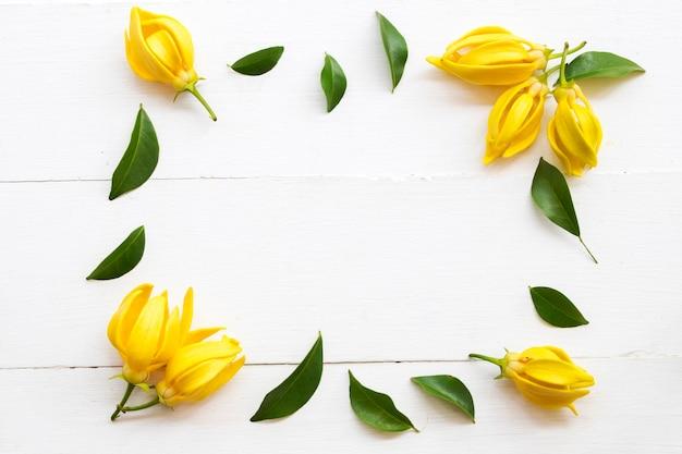 Fiori gialli disposizione ylang ylang disposizione piatta stile cartolina