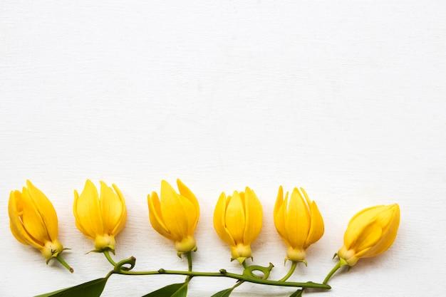 Fiori gialli ylang ylang arrangiamento stile cartolina