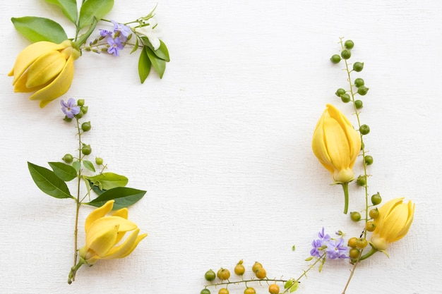 Fiori gialli ylang ylang su bianco