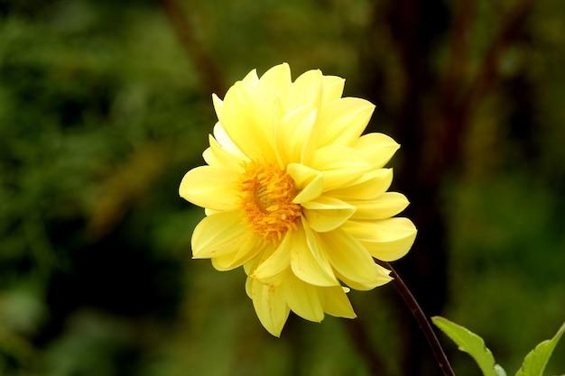 Flusso giallo
