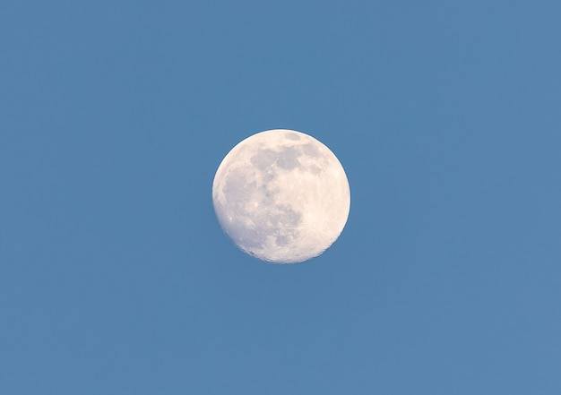 Luna piena gialla nel cielo blu della sera, twiling. avvicinamento