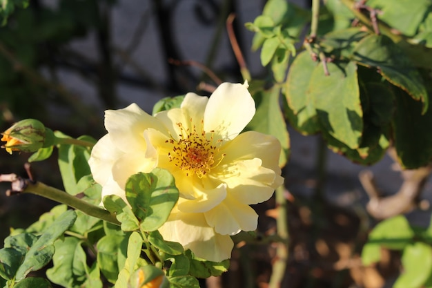 Campo di fiori in oro giallo sotto la luce del giorno della stagione estiva