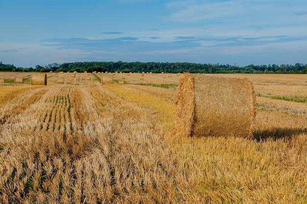 Giallo dorato paglia balle di fieno nel campo di stoppie, campo agricolo sotto un cielo azzurro con nuvole