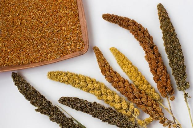 Spighe di miglio gialle, verdi e rosse. miglio di grano.