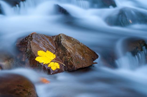 Foglia gialla su una pietra con muschio in prossimità di una cascata