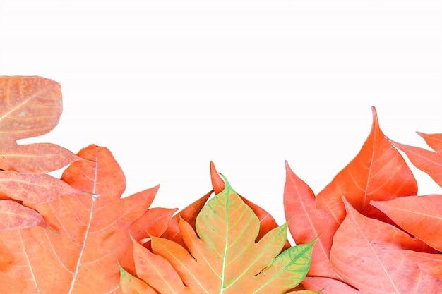 Foglia di autunno delle foglie di giallo su fondo isolato
