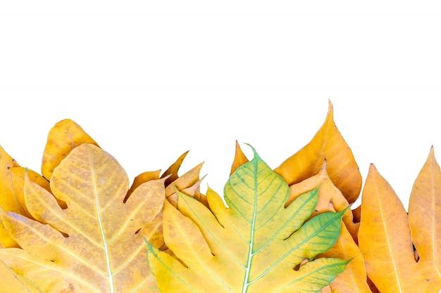 Foglia di autunno delle foglie di giallo sopra il fondo di isolamento