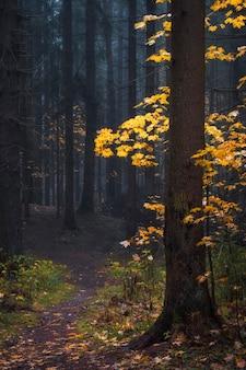 Foglie gialle in una cupa foresta nebbiosa