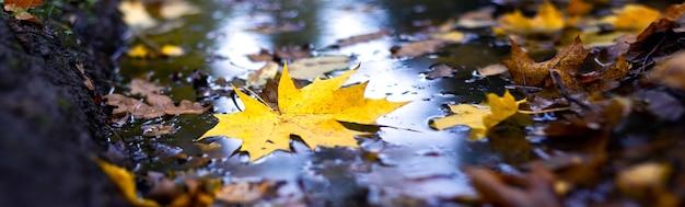Foglia di acero gialla in una pozzanghera, panorama. tardo autunno nella foresta