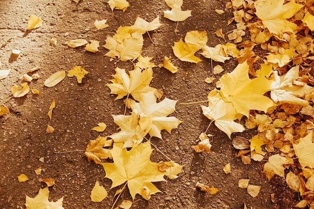 Foglie di acero gialle sulla superficie dell'asfalto bagnato. foglie dorate. fogliame autunnale. caduta d'oro in città.
