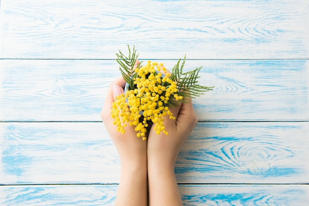 Fiore giallo della mimosa su fondo blu di legno