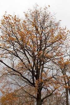 Fogliame giallo e arancione sugli alberi in autunno
