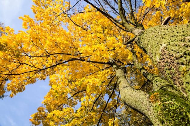Fogliame giallo e altro sugli alberi all'inizio dell'autunno, alberi luminosi con tempo soleggiato