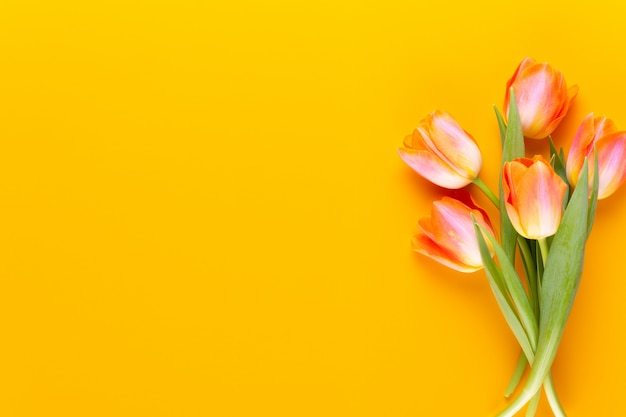 I pastelli gialli colorano i tulipani su fondo giallo.