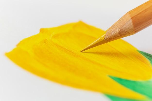 La matita gialla disegna un tulipano su carta bianca.