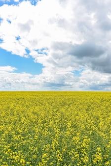 Campo di colza giallo con cielo nuvoloso