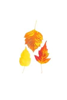 Primo piano giallo e rosso delle foglie di acero