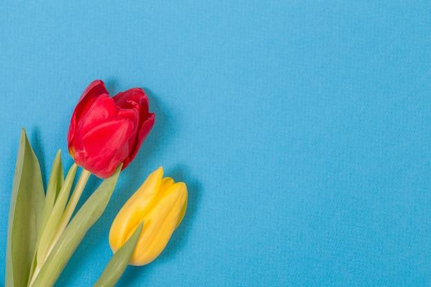 Tulipani gialli e rossi su sfondo blu