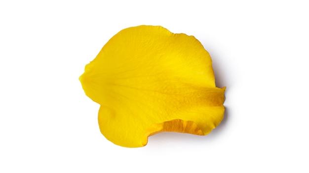 Petalo di rosa giallo isolato su uno sfondo bianco. foto di alta qualità