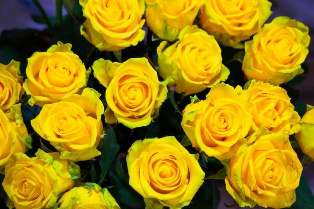 Fiori di rose gialle, sfondo floreale per la festa della mamma, invito a nozze, biglietto di auguri e biglietto d'invito
