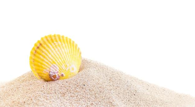 Conchiglia di mare giallo in mucchio di sabbia isolato su sfondo bianco