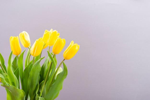 Tulipani gialli su sfondo di carta grigia con posto per il testo