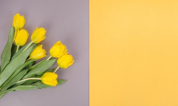 Tulipani gialli su sfondo grigio-giallo, con spazio di copia