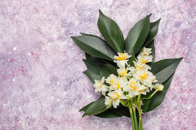 Narciso bianco giallo, narciso, fiore di giunchiglia su calcestruzzo rosa. 8 marzo festa della donna.