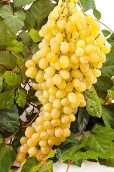Acino d'uva giallo con foglia