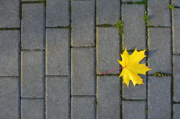 Foglia autunnale gialla sullo sfondo delle lastre per pavimentazione