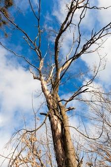 Foglie ingiallite e cangianti sugli alberi in autunno, la natura in autunno