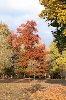 Foglie ingiallite sugli alberi - foglie ingiallite sugli alberi che crescono nel parco cittadino, stagione autunnale, un piccolo dof,