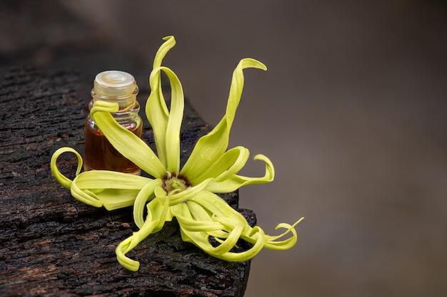 Fiore di ylang-ylang o cananga odorata e olio essenziale sulla natura.