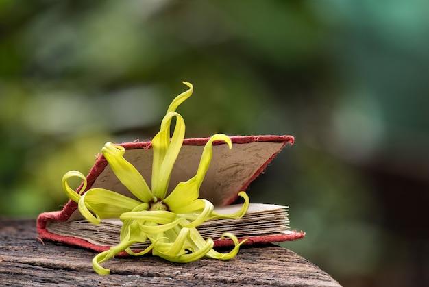 Fiore di ylang-ylang o cananga odorata sulla natura.
