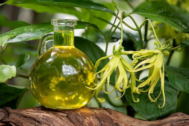 Ylang-ylang o cananga odorata fiore e olio sulla natura.
