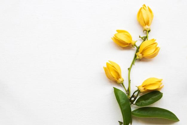 Ylang ylang disposizione dei fiori in stile cartolina piatto laici