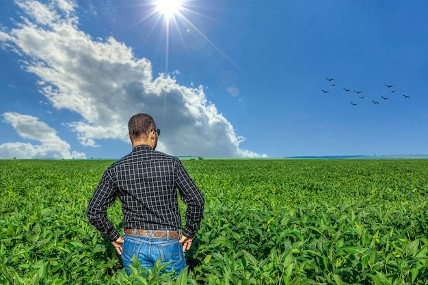 Giovane agronomo guardando la piantagione di soia.