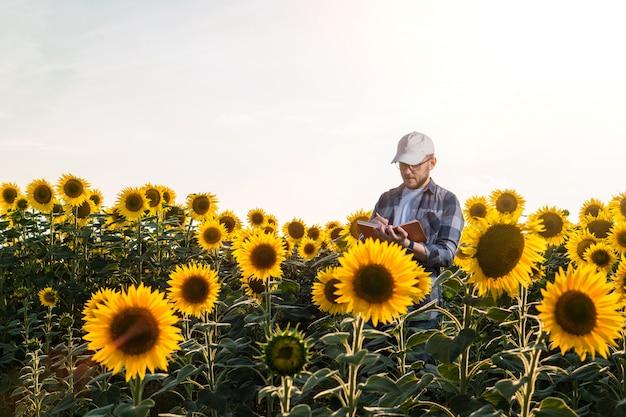 Giovane agronomo che lavora nel campo di girasole